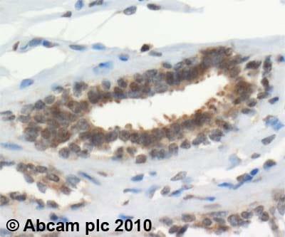 Immunohistochemistry (Formalin/PFA-fixed paraffin-embedded sections) - Anti-TXNRD1 antibody (ab16840)
