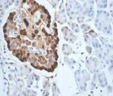 Immunohistochemistry (Formalin/PFA-fixed paraffin-embedded sections) - Anti-Glucagon antibody [EP3070] - BSA and Azide free (ab167078)