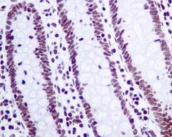 Immunohistochemistry (Formalin/PFA-fixed paraffin-embedded sections) - Anti-GLYR1 antibody [EPR10077(B)] (ab167155)