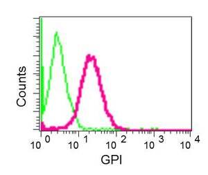 Flow Cytometry - Anti-AMF antibody [EPR11663(B)] (ab167394)