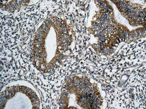 Immunohistochemistry (Formalin/PFA-fixed paraffin-embedded sections) - Anti-RPS12 antibody [EPR10964(B)] (ab167428)