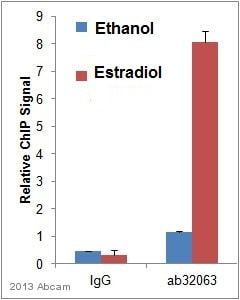 ChIP - Anti-Estrogen Receptor alpha antibody [E115] - Low endotoxin, Azide free (ab167611)