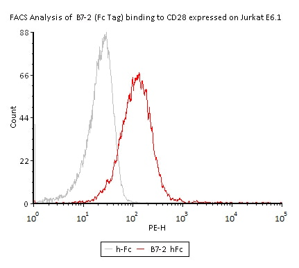 Functional Studies - Recombinant human CD86 protein (ab167720)