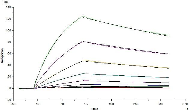 Functional Studies - Recombinant Human CTLA4 protein (ab167727)