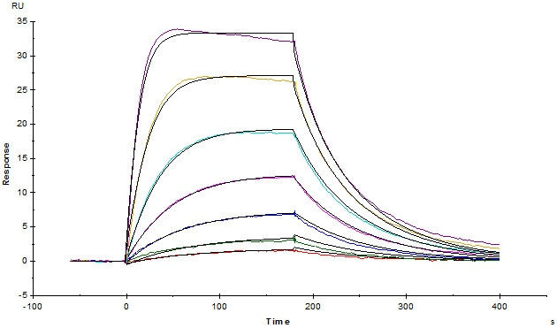 Functional Studies - Recombinant human IL-13 receptor alpha 1 protein (ab167745)