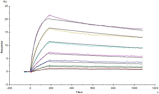 Functional Studies - Recombinant human CD3 epsilon protein (ab167755)