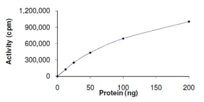 Functional Studies - Recombinant human PKD2 (mutated G870 E) protein (ab167923)