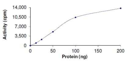 Functional Studies - Recombinant human PRMT1 protein (ab167927)
