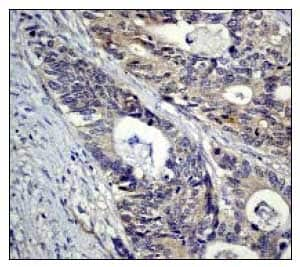 Immunohistochemistry (Formalin/PFA-fixed paraffin-embedded sections) - Anti-IKK alpha antibody [Y463] - BSA and Azide free (ab169743)