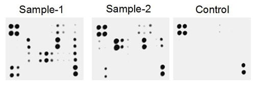Multiplex Protein Detection - Human Th1/Th2/Th17 Antibody Array - Membrane (34 targets) (ab169809)