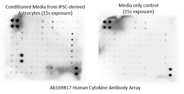 Multiplex Protein Detection - Human Cytokine Array - Membrane (60 targets) (ab169817)