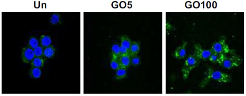 Immunocytochemistry/ Immunofluorescence - Anti-TLR9 antibody [5G5] (Biotin) (ab17236)