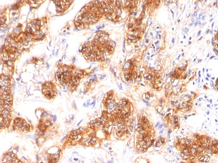 Immunohistochemistry (Formalin/PFA-fixed paraffin-embedded sections) - Anti-Milk Fat Globule 1 antibody [SPM291] (ab17787)