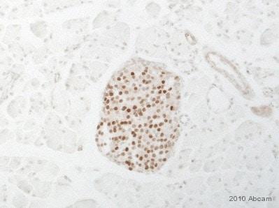 Immunohistochemistry (Formalin/PFA-fixed paraffin-embedded sections) - Anti-MafA antibody (ab17976)