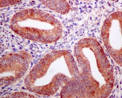 Immunohistochemistry (Formalin/PFA-fixed paraffin-embedded sections) - Anti-Nicalin antibody [EPR8529] (ab170100)