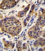 Immunohistochemistry (Formalin/PFA-fixed paraffin-embedded sections) - Anti-YOD1 antibody - C-terminal (ab170179)