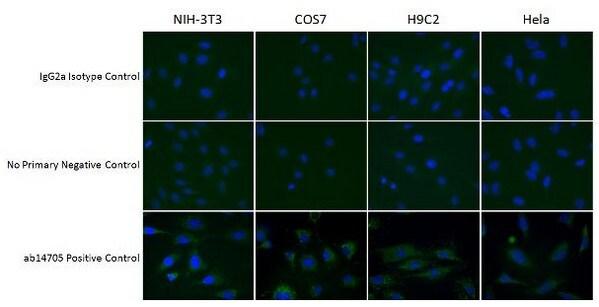 Immunocytochemistry/ Immunofluorescence - Mouse IgG2a, kappa monoclonal [18C8BC7AD10] - Isotype Control (ab170191)