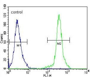 Flow Cytometry - Anti-KLF14 antibody - C-terminal (ab170225)