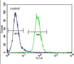 Flow Cytometry - Anti-FOXD4L1 antibody - Aminoterminal end (ab170267)