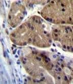 Immunohistochemistry (Formalin/PFA-fixed paraffin-embedded sections) - Anti-DCDC5 antibody - C-terminal (ab170295)