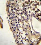 Immunohistochemistry (Formalin/PFA-fixed paraffin-embedded sections) - Anti-Ecat1 antibody (ab170298)