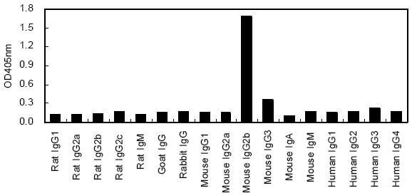 ELISA - HRP Anti-IgG2b antibody [KT93] (ab170322)