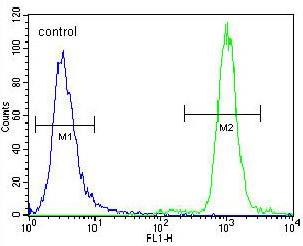 Flow Cytometry - Anti-ZNF28 antibody - N-terminal (ab170365)