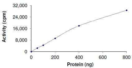 Functional Studies - Recombinant human Dnmt3b protein (ab170410)