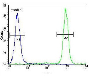 Flow Cytometry - Anti-SSH3 antibody - C-terminal (ab170440)