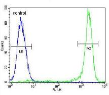 Flow Cytometry - Anti-KSR2 antibody (ab170442)