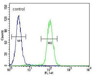 Flow Cytometry - Anti-SIK3 antibody - C-terminal (ab170468)
