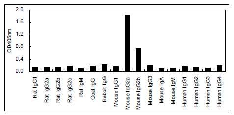 ELISA - HRP Anti-IgG2a antibody [KT92] (ab170489)
