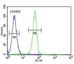 Flow Cytometry - Anti-PLEKHA4 antibody - N-terminal (ab170537)