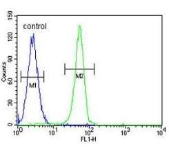 Flow Cytometry - Anti-PLEKHA4 antibody - N-terminal (ab170537)