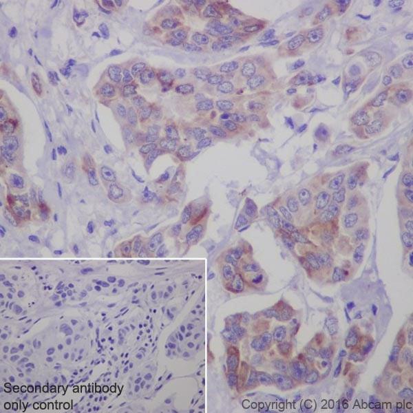 Immunohistochemistry (Formalin/PFA-fixed paraffin-embedded sections) - Anti-Bim antibody [Y36] - BSA and Azide free (ab170589)