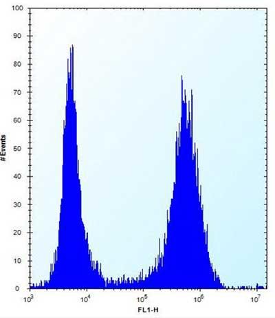 Flow Cytometry - Anti-MT-ND3 antibody - N-terminal (ab170681)
