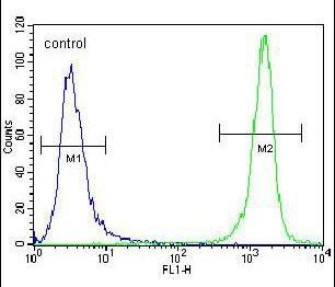 Flow Cytometry - Anti-PRAMEF8 antibody - C-terminal (ab170710)