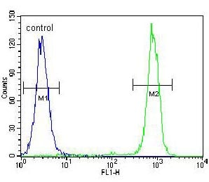 Flow Cytometry - Anti-Carboxypeptidase B/CPB antibody - N-terminal (ab170724)