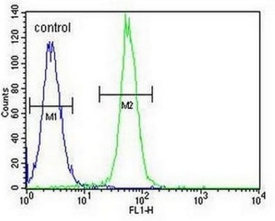 Flow Cytometry - Anti-ARL5B antibody - C-terminal (ab170810)
