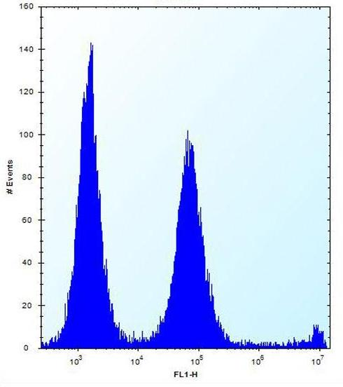 Flow Cytometry - Anti-POLR2G antibody - C-terminal (ab170847)