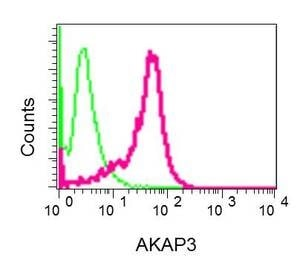 Flow Cytometry - Anti-AKAP3 antibody [EPR11261] (ab170856)
