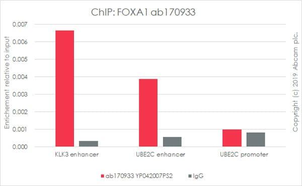 ChIP - Anti-FOXA1 antibody [EPR10881] - ChIP Grade (ab170933)