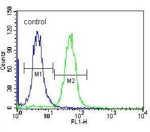 Flow Cytometry - Anti-CACNG4 antibody (ab171143)