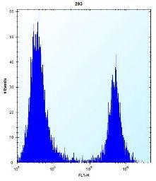 Flow Cytometry - Anti-FKBP7 antibody - C-terminal (ab171313)
