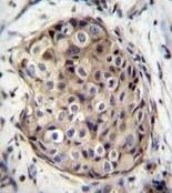 Immunohistochemistry (Formalin/PFA-fixed paraffin-embedded sections) - Anti-GMPR1 antibody - C-terminal (ab171326)