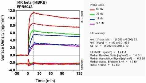 Other - Anti-IKK beta antibody [EPR6043] - BSA and Azide free (ab171364)
