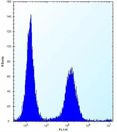 Flow Cytometry - Anti-ENOX2 / tNOX antibody - N-terminal (ab171420)