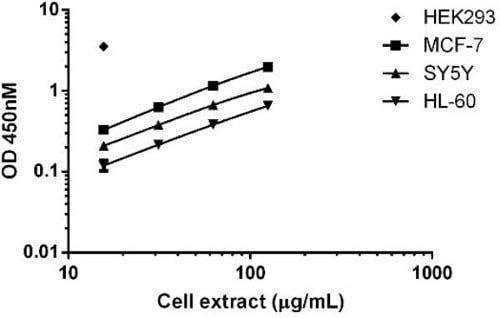 Comparison of catalase expression in different cell lines