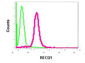 Flow Cytometry - Anti-RECQ1 antibody [EPR8049(2)] (ab172607)