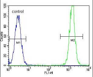 Flow Cytometry - Anti-KRAS antibody - C-terminal (ab172949)